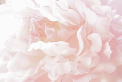 Abstract of pink pastel rose petals , Soft focus background.Designed for wedding invitation, anniversary,valentines,ceremony theme
