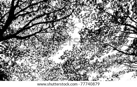 Abstract pattern from silhouettes of leaves