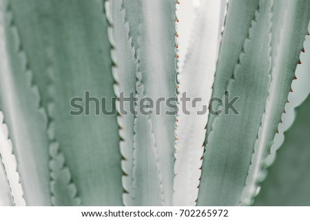abstract pattern of agave plant.