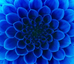 Abstract petals of a flower