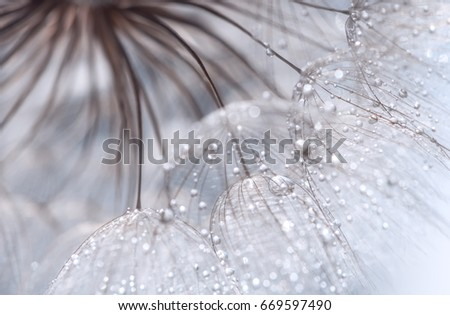 Abstract photo of a dandelion with water drops. Selective soft focus