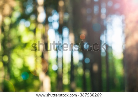 Abstract photo of green trees with leaves and sunshine coming through. Beautiful bokeh. Defocused picture.