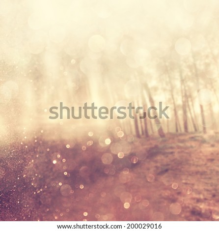abstract photo of light burst among trees and glitter bokeh. filtered image and textured.