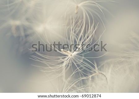 abstract photo of white  feather