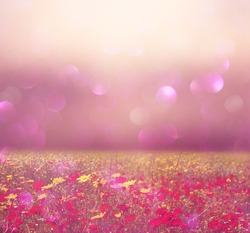 abstract photo of wild flower field and bright bokeh lights