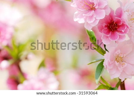 Abstract Pink Flower Background