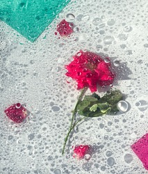 Abstract pink rose under glass plate with water drops and splash on light background. Pink flower and pink petals. Abstract floral aesthetic. Artistic flower. Drops and blobs pattern. Water surface.