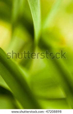 abstract plant close up shot