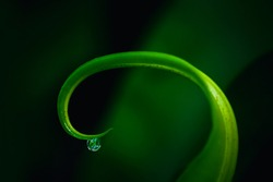 Abstract plant swirl fresh green leaf with water drops. relaxation nature concept. abstract blur green background.
