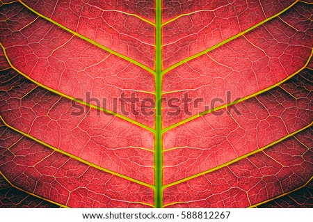 abstract red striped from nature, detail of leaf textured background