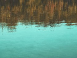 abstract reflection of tree on water in the park, natural background vintage tone