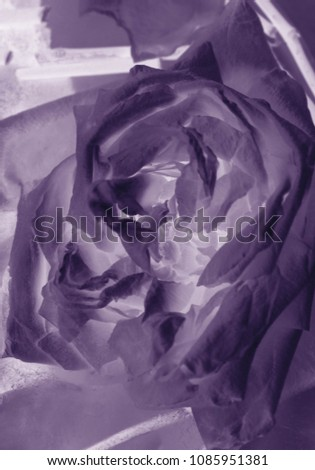 Abstract rose color flower background #1085951381