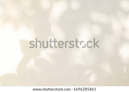 Abstract rose gold light bokeh of natural leaves shadow blurred background of tree branch fon white concrete wall texture, nature art on wall, pink rose gold shadow on white background