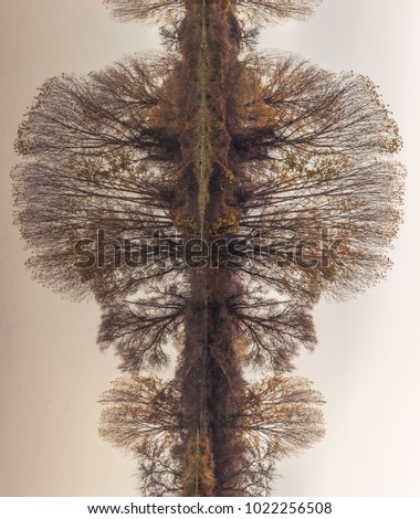 Abstract, rotated, reflection of riverbank trees on the calm river water, creating perfect natural symmetry, resembling rorschach test images #1022256508