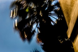 Abstract, rotational, motion-blurred scene of silhouetted palm tree and earth-toned wall, with golden and white light-streaks, under blue sky