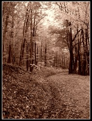 Abstract sepia photo of a hiking trail in the forest. Hiking adventure in austria.
