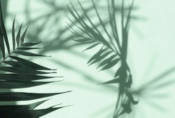 Abstract shadow background of natural palm leaves tree branch falling on neo mint color wall texture for background and wallpaper.