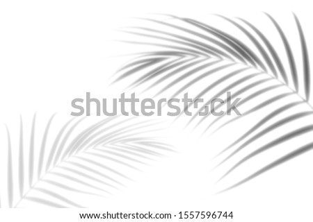 Abstract shadow black white palm leaf shadow on a white wall Background. Blank copy space.