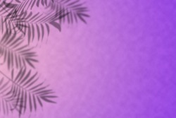 Abstract shadow black white palm leaf shadow on pink, violent wall Background Blank copy space Tropic style Gradient