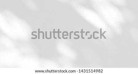 Abstract Shadow. blurred background. gray leaves that reflect concrete walls on a white wall surface for blurred backgrounds and monochrome wallpapers