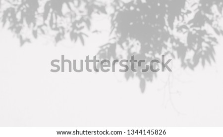 abstract shadow of leaves on white concrete wall  #1344145826