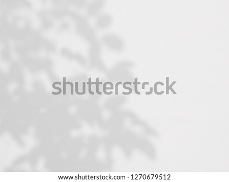 abstract shadow of the leaves on a white wall background #1270679512