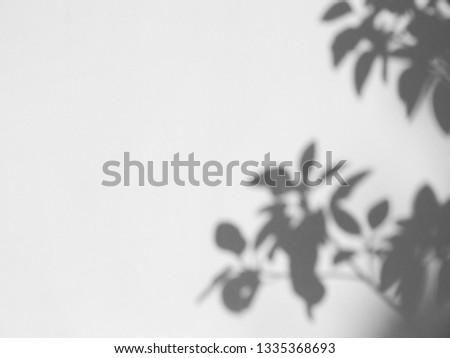 abstract shadow of the leaves on a white wall background #1335368693