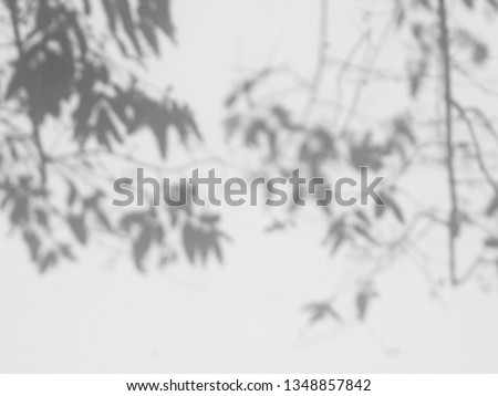 abstract shadow of tree with leaf on white concrete wall #1348857842