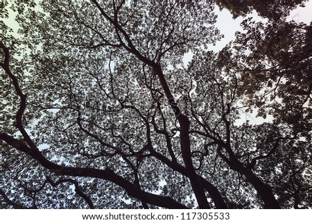Abstract shadow wooden tree background