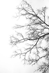 Abstract silhouette branches background, as a side face shape