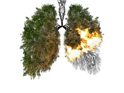 Abstract silhouette of lungs on a white background . Trees are the lungs of the planet. Air pollution. Harm to nature. Ecological concept. Tree branch. The concept of pneumonia and bronchitis.