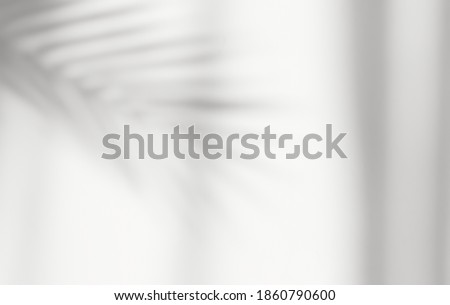 Abstract silhouette shadow white background of natural leaves tree branch falling on wall. Transparent blurry shadow of tropical leaves morning sun light.