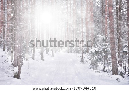 abstract snowfall forest background, white snowflakes fall in the forest landscape, christmas background