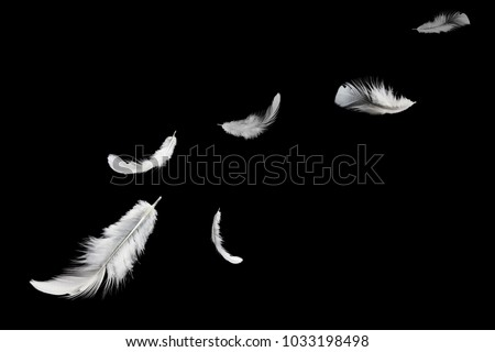 Abstract, soft white feather floating in the air, isolated on black background