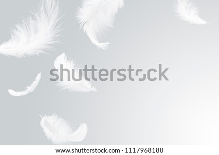 Abstract solf white feather floating in the air