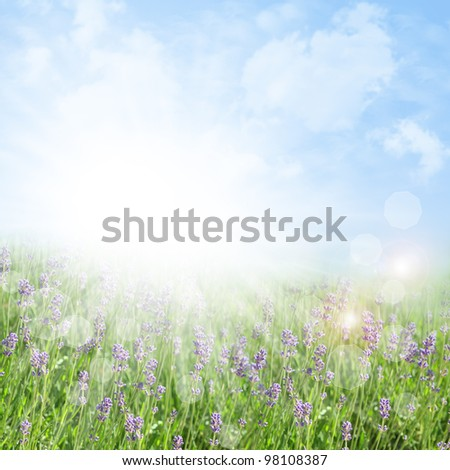 Abstract spring and summer background with lavender and bokeh