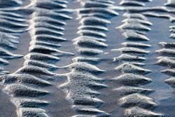 abstract structure on the beach. uniform bumps of sand lined up, formed by the water during low tide
