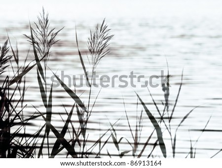 Abstract stylized nature background with coastal reed and lake water