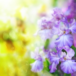 abstract summer flower Background