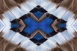 Abstract symmetric pattern of blue, white and brown feathers of wild duck close-up as background. Seamless ornamental surreal tracery of bird feathers. The image with mirror effect