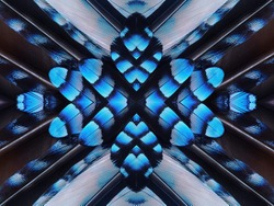 Abstract symmetric pattern of feathers of Eurasian jay with blue stripes close-up as background. The texture of the wing feathers. The image with mirror effect. Kaleidoscopic abstract pattern.