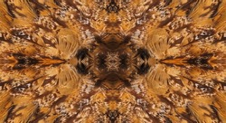 Abstract symmetric pattern of feathers owls close-up as background. The texture of the wing feathers of the owl. Macro of the brown and yellow feathers of a owl. The image with mirror effect.