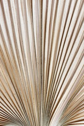 Abstract texture background with close up of dried natural palm tree leaf