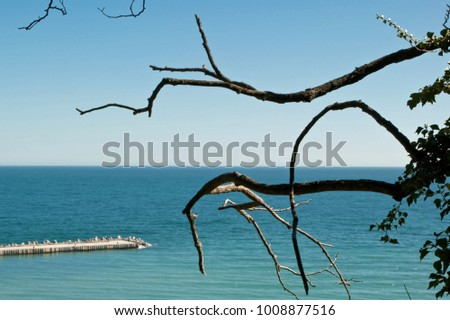 Abstract texture of the branches of a tree on the background of blue sea water surface and a part of concrete breakwater, blue sky. #1008877516