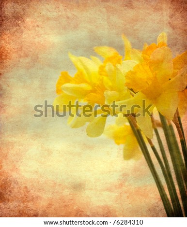 Abstract textured closeup of daffodil flowers for vintage look
