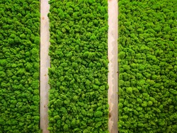 Abstract textured green background of stabilized moss and wood planks. High quality photo