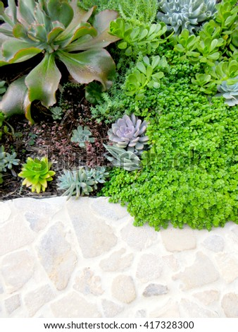 Abstract Top Succulent Landscaping Textures Vignette 417328300