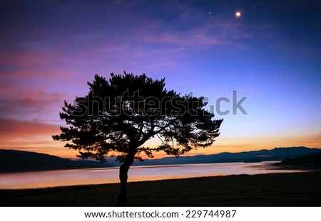 abstract tree silhouette over the moon sunrise near lake