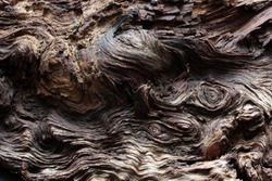abstract tree texture