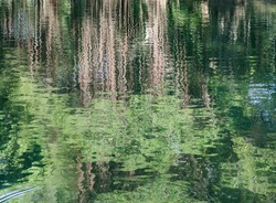 Abstract trees reflection on rippled water surface